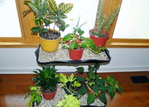 Houseplants by Sonia Clem