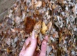 Shredded leaf mulch post size